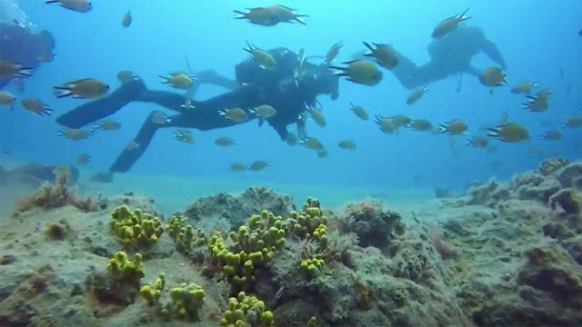 Scuba diving and dive sites on Lanzarote - Waikiki Reef