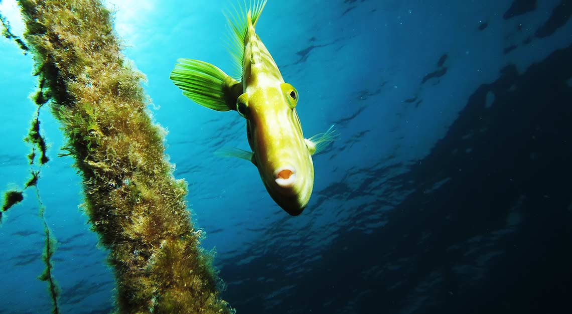 Diving and courses offers on line - Canary Island Divers